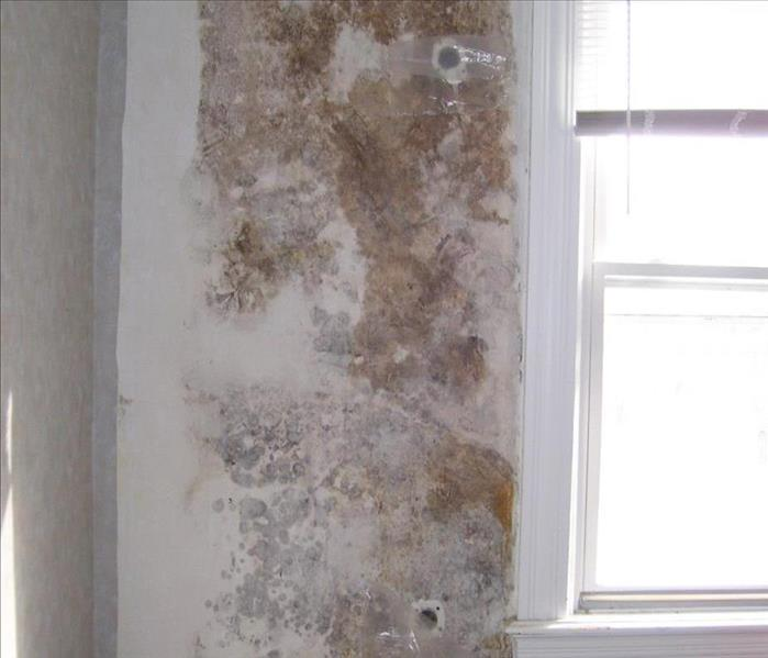 Leaky Window Sill leads to Mold